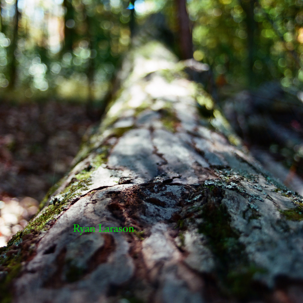 Tree Trunk Macro_SQ_WM.jpg