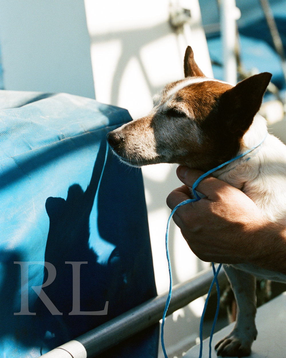 Dog on Aran Islands Ferry_810_WM.jpg