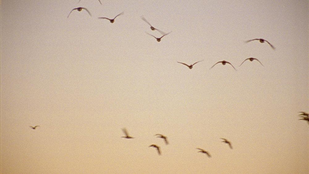 Geese Flying Away.jpg
