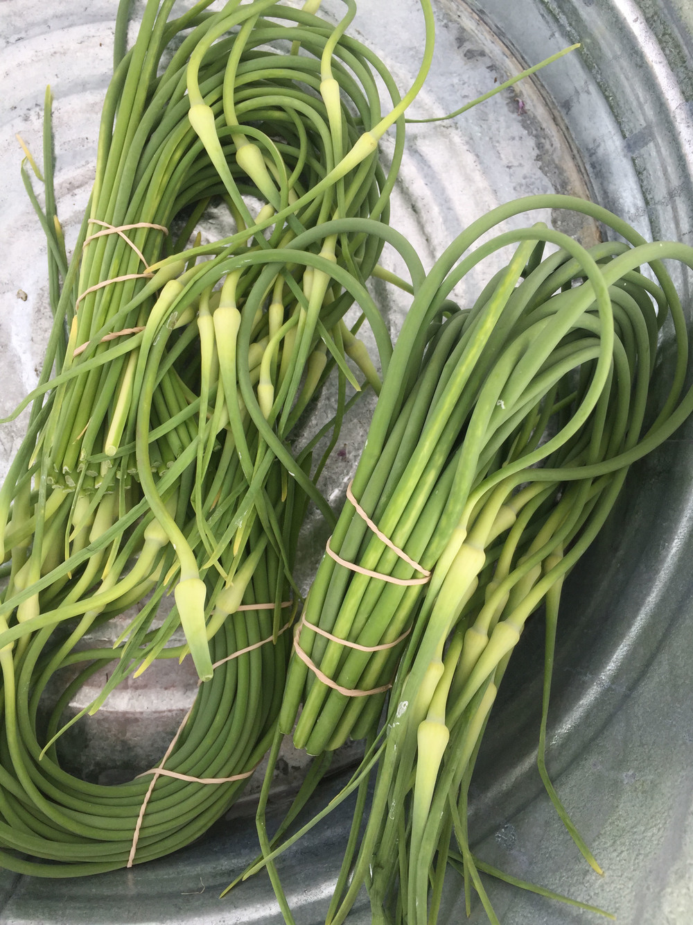 Garlic Scapes by Flora Bay Farm