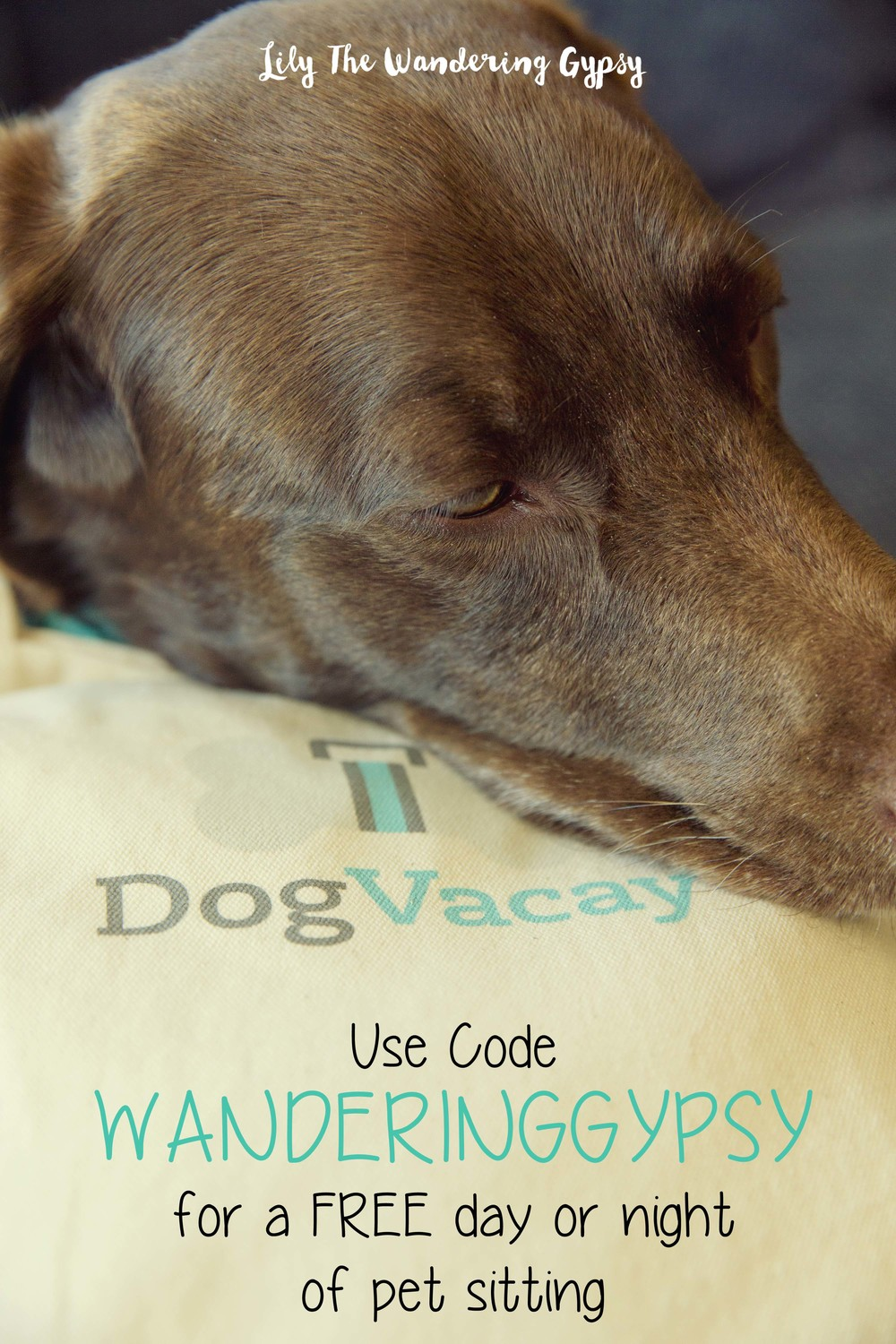 Use code WANDERINGGYPSY for a FREE day or night of pet sitting on  DogVacay !!