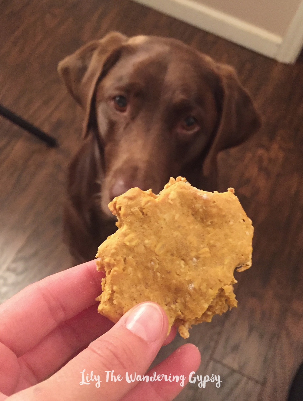 Pumpkin Oatmeal Dog Treats Recipe