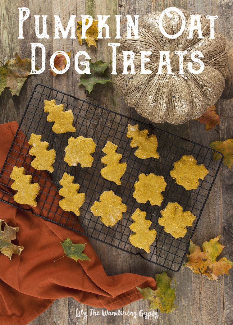 Pumpkin Oat Dog Treats