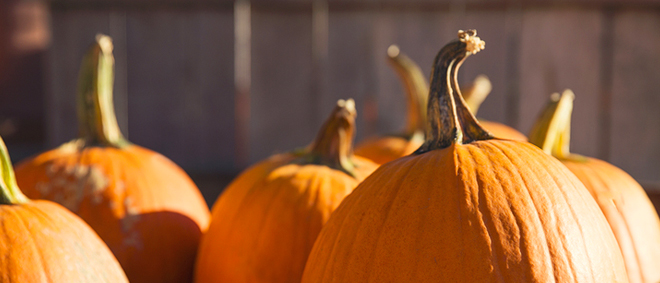 Get Fall inspiration from my visit to the pumpkin patch, here!