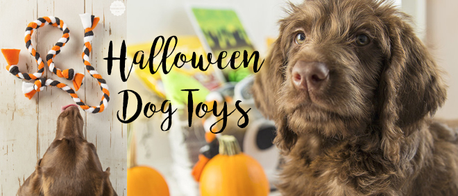 #PawfectBOO Kit + #BOOItForward - Dog Lover's Gift Basket + DIY Dog Toys