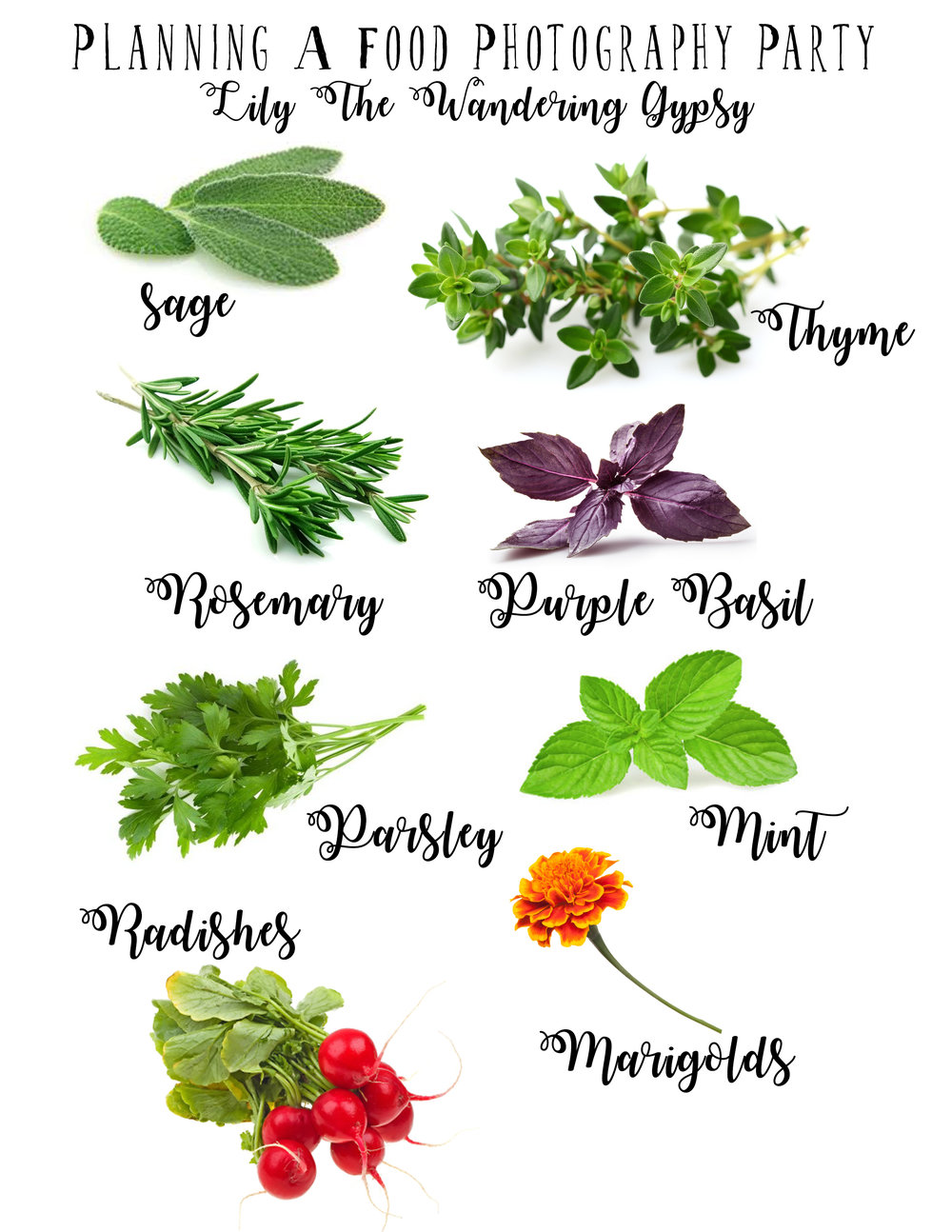 Good Herbs For Food Photography