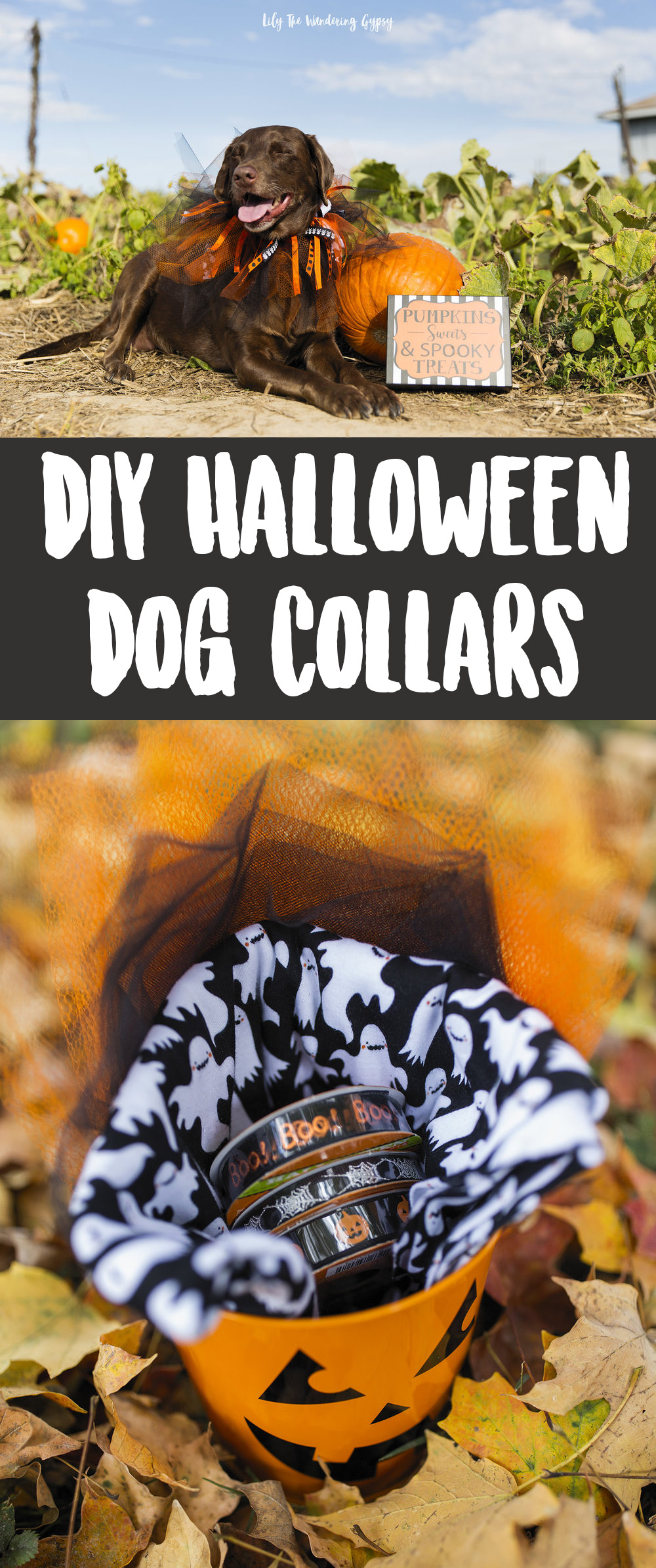 DIY Halloween Dog Collars