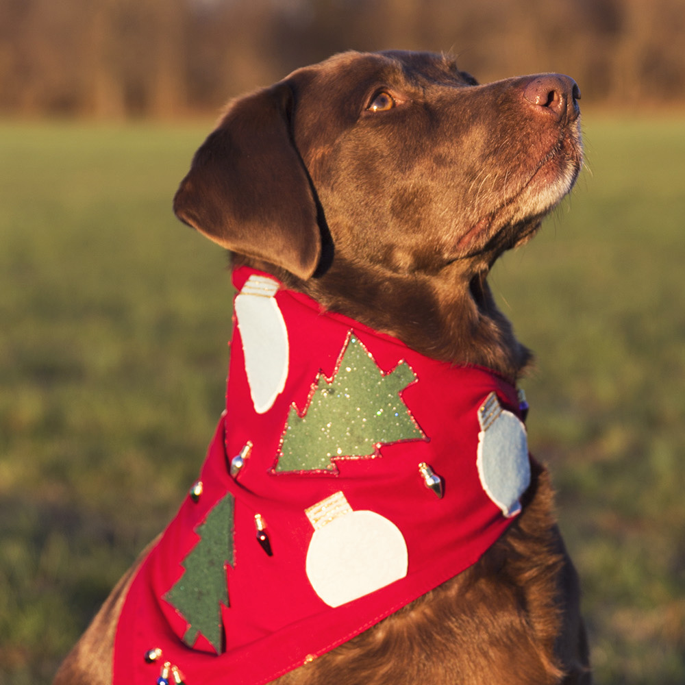Ugly Christmas Sweater Dog Bandana - DIY Tutorial Dec 21, 2015