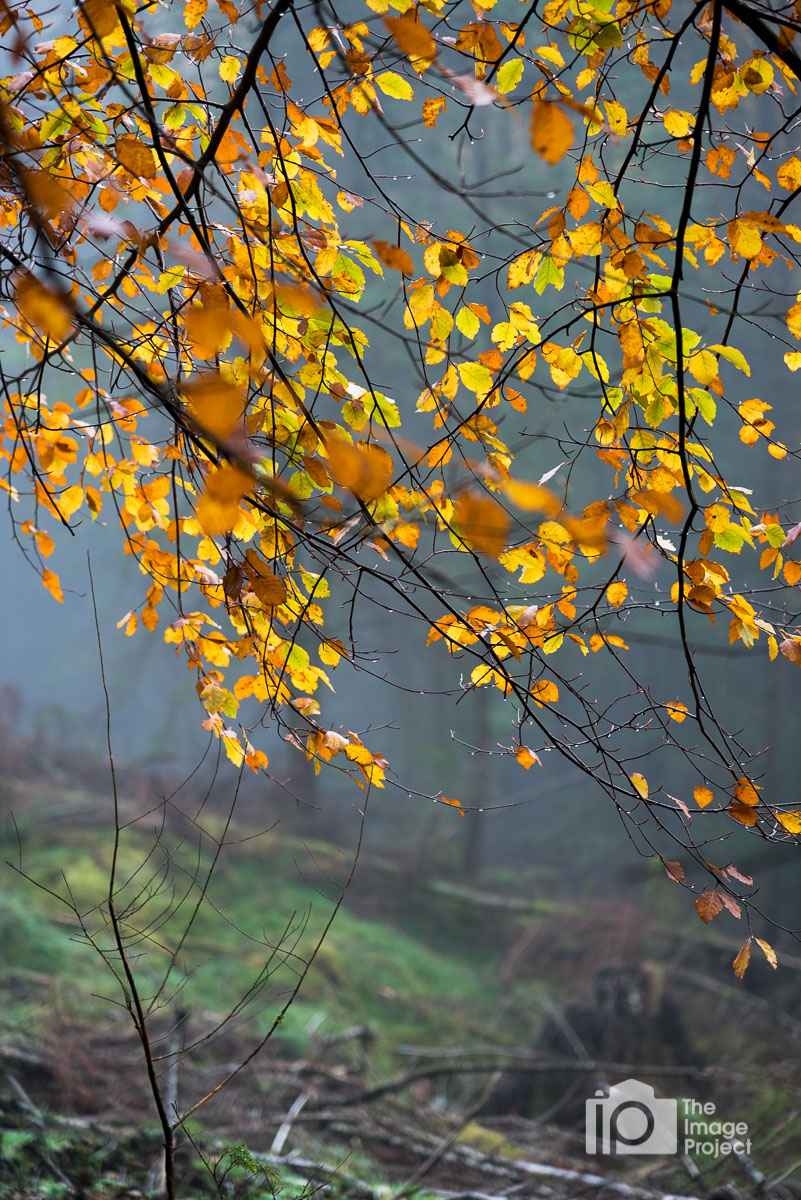2015 10 oct lake district autumn-157.jpg