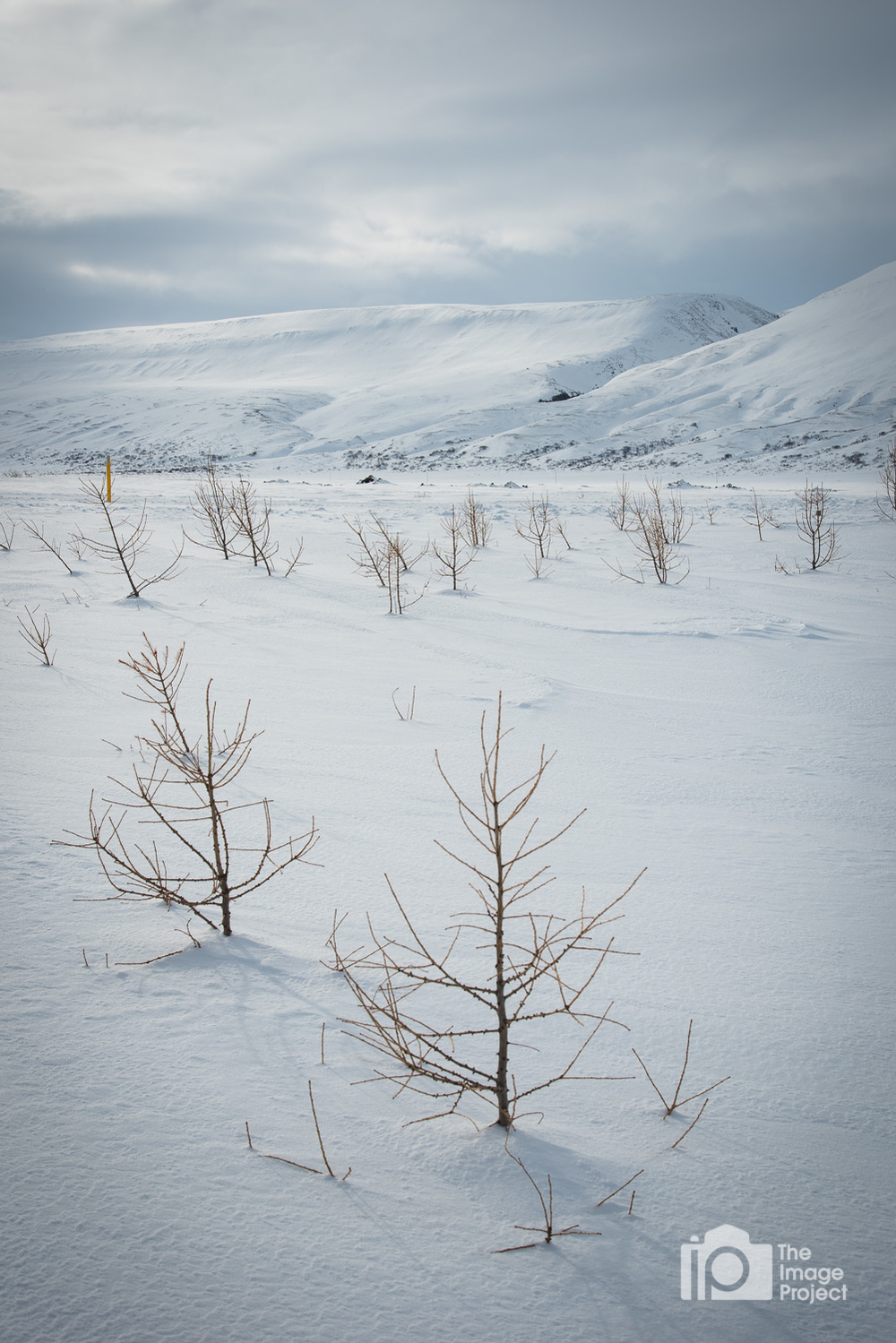 Sapling trees in frozen snowy winter landscape north iceland by nathan barry the image project