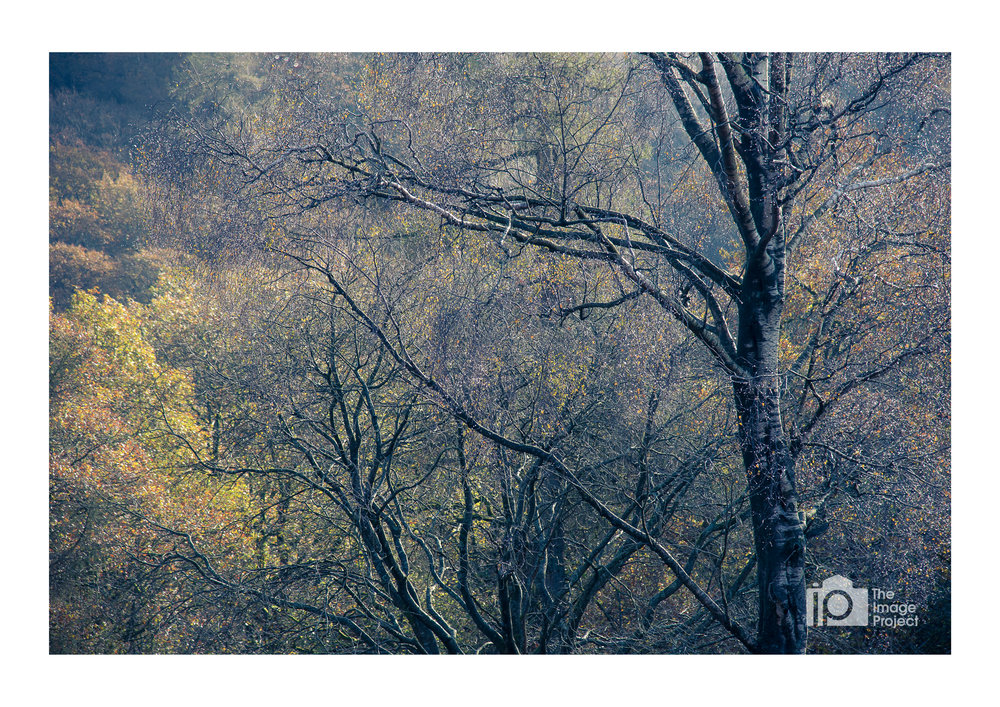 Light hits wet trees, Holme Fell