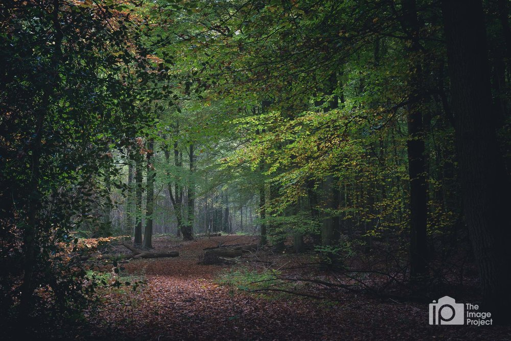 Winding forest path, Northants