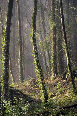 Snowdonia forest