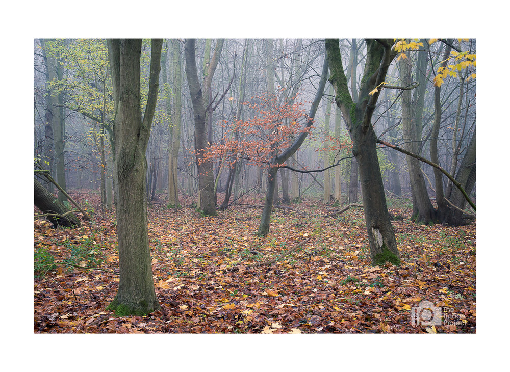 Woodland scene in autumn just outside Banbury - come join a photo walk!