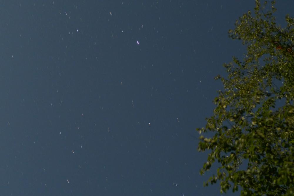 treestar.jpg