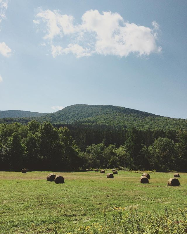 Spruceton Valley, so beautiful I went back the next day. #catskills