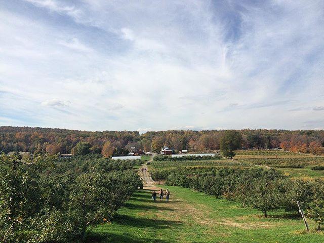 Tried to go pumpkin picking but found apples instead. #applepie