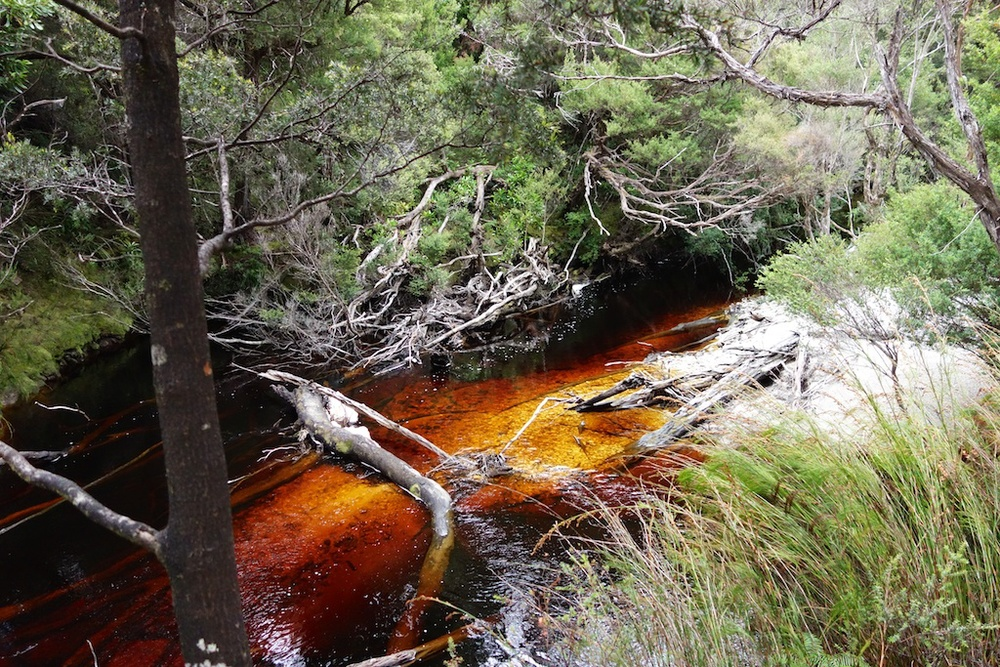 Louisa Creek - coloured with tannins (we drank this water)
