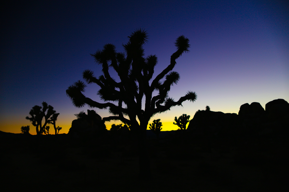 Joshua Tree National Park, California