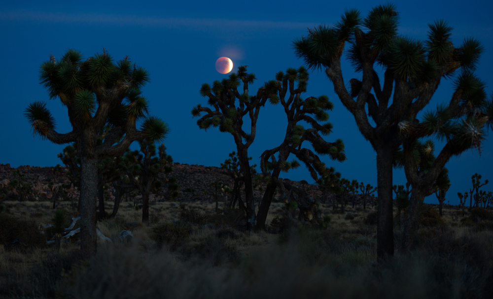 Super Blood Moon, Joshua Tree National Park, California