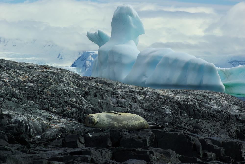 Seal, Enterprise Island, Antarctica
