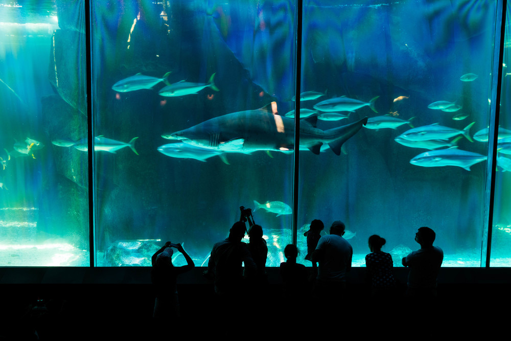 Aquarium, Cape Town, South Africa