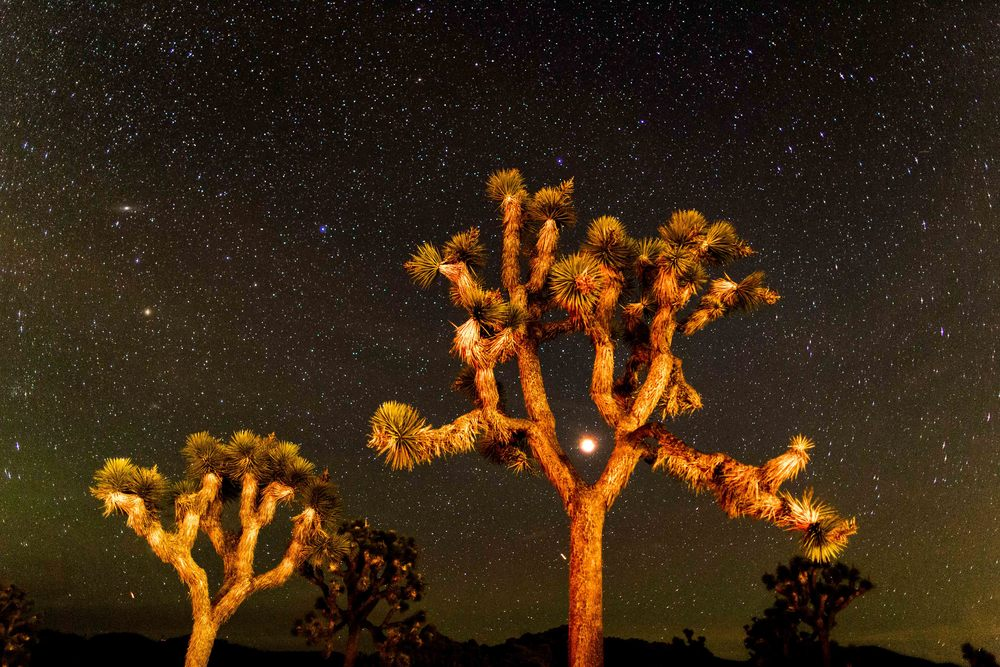 Blood Moon, Joshua Tree National Park, California