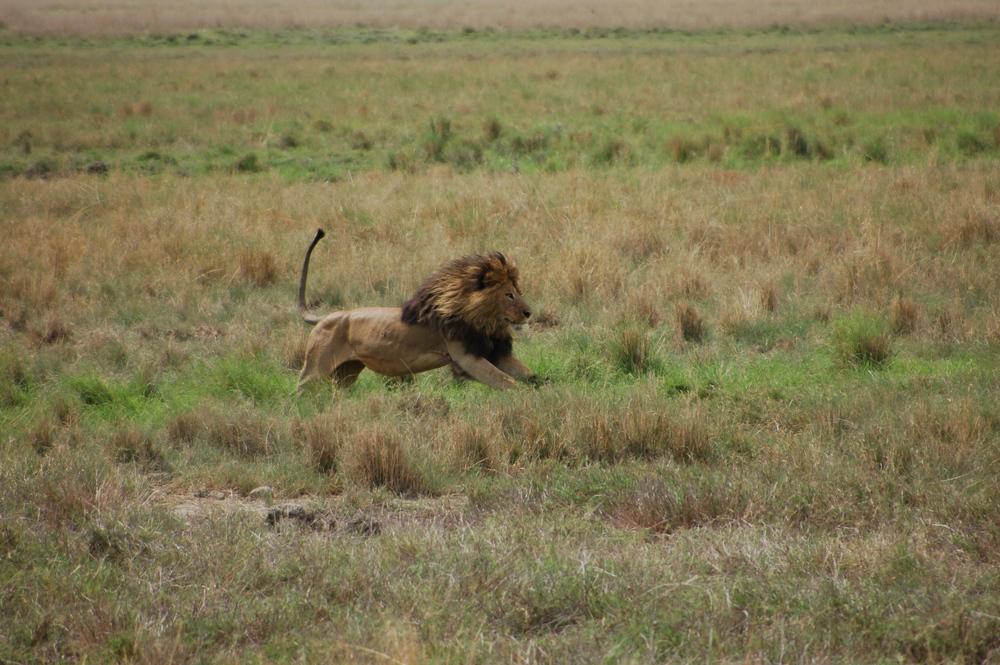 Tanzania, Botswana, Uganda, Kenya, Ethiopia,Eastern and Southern African Safaris