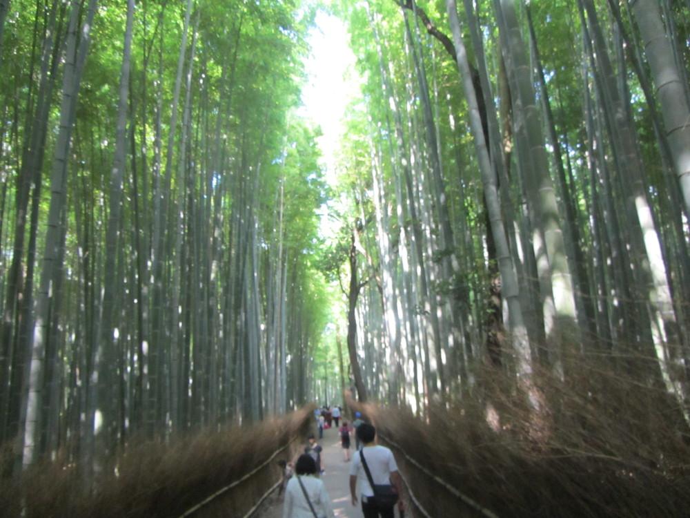 7.19.14 Kyoto, Japan- Arashiyama Bamboo Path (2).JPG