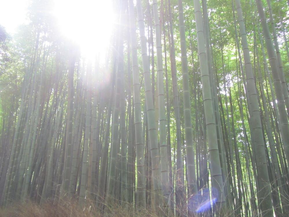 7.19.14 Kyoto, Japan- Arashiyama Bamboo Path (5).JPG