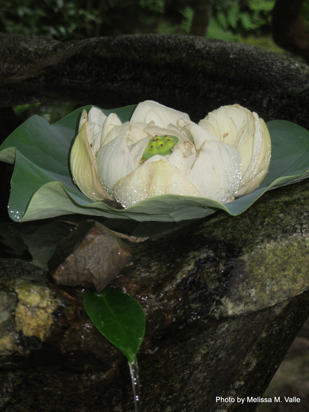 7.19.14 Kyoto, Japan-Honen-in Temple (12).JPG