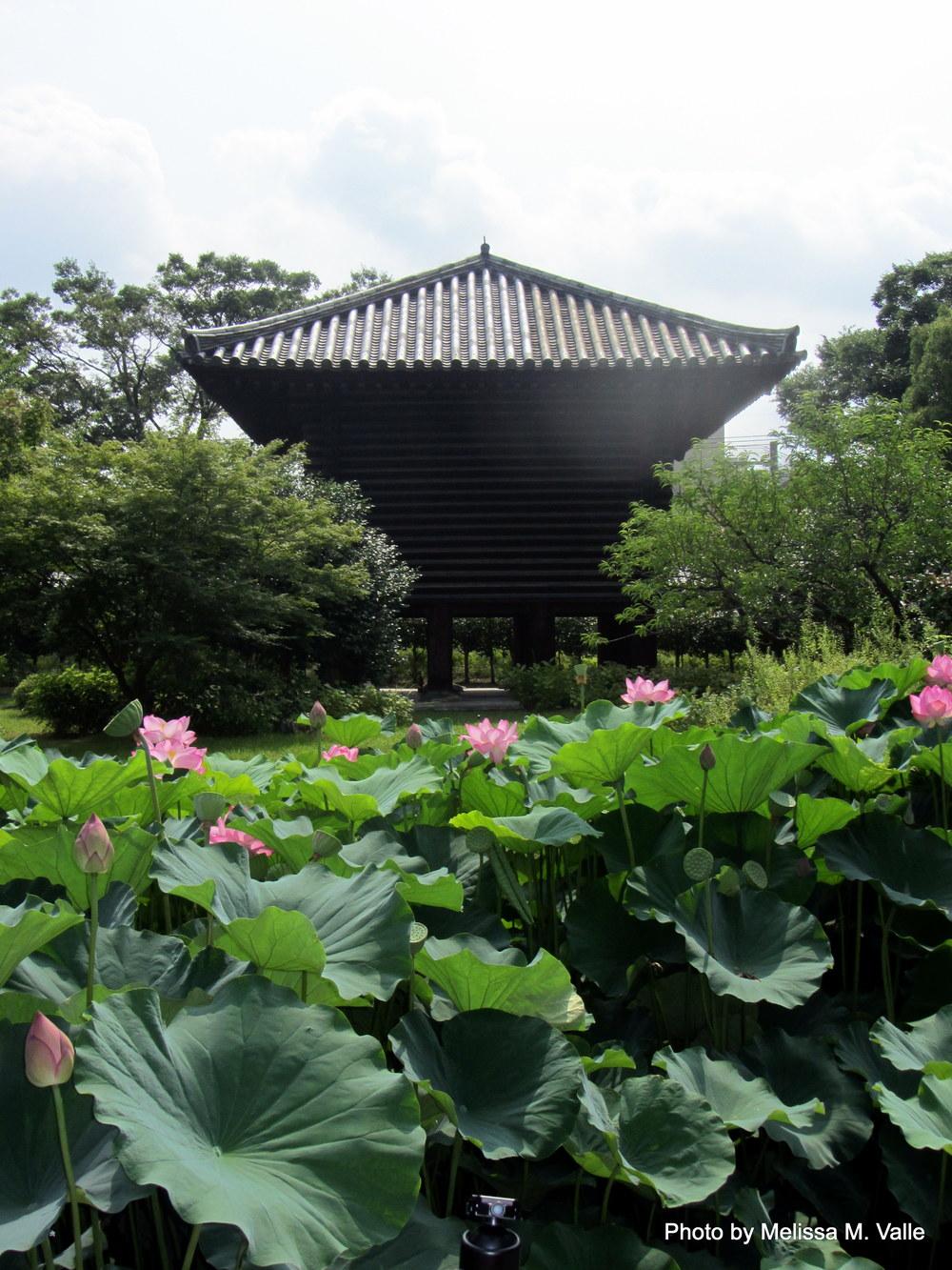 7.21.14 Tokyo, Japan- Toji Temple and Kobo-San Market (13).JPG