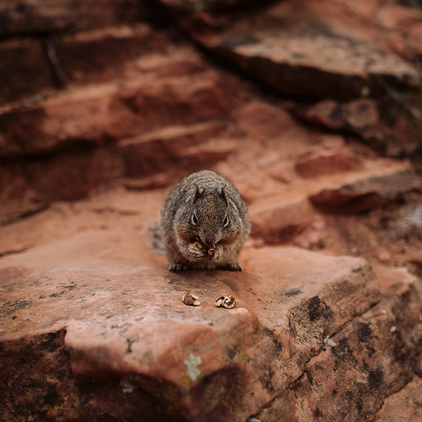 Squirrel sitting on ledge in Zion National Park