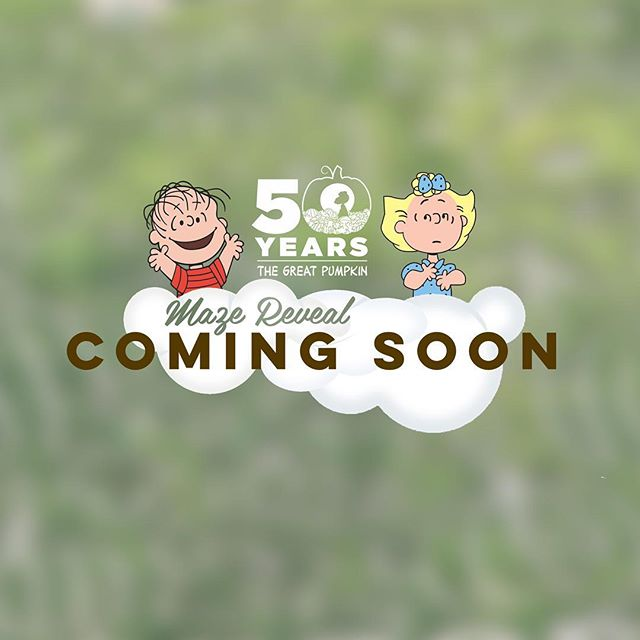 Launching September 17th! #westendcreamery #fallfestival #cornmaze #family #centralmass #peanutsmaze #greatpumpkin50