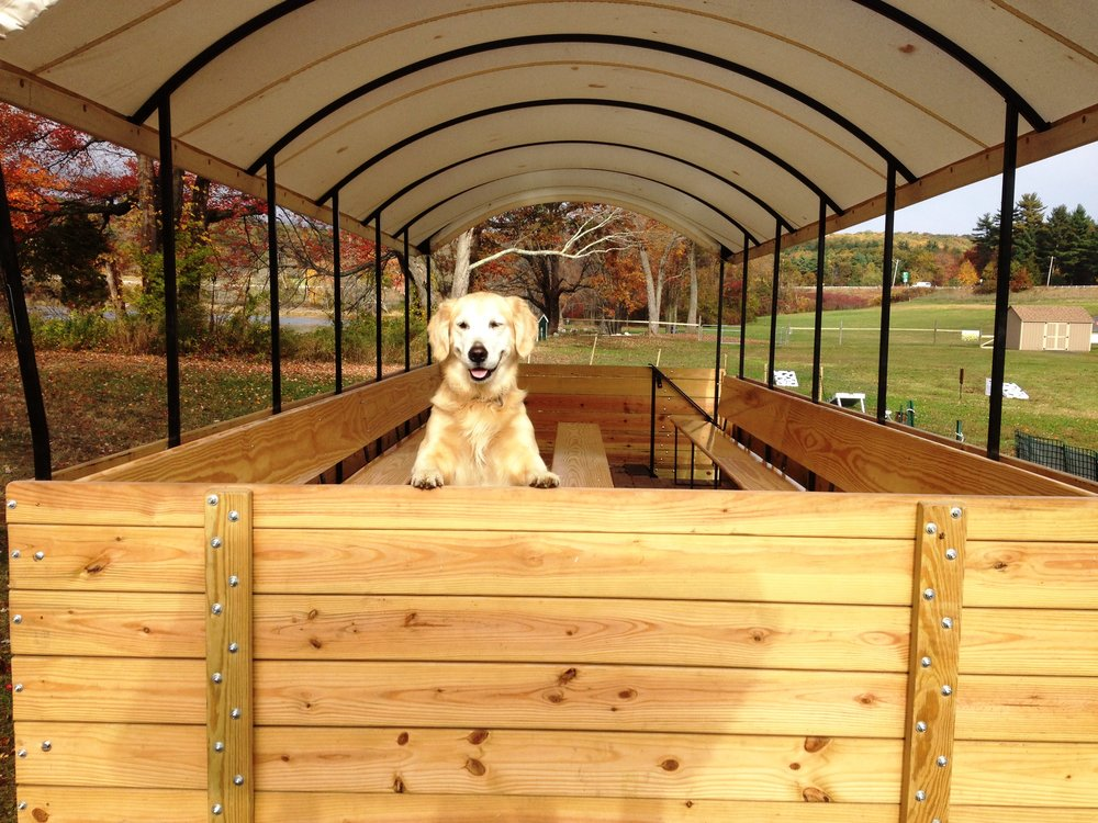 Bailey Grace: Our family's Golden Retriever!