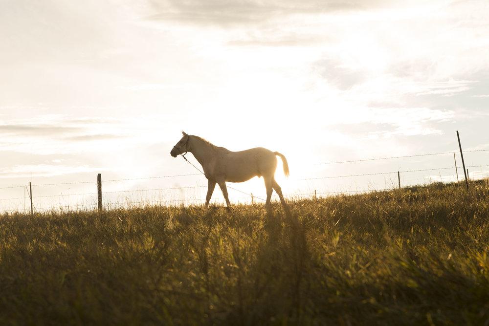 Horse @ Sunset.jpg