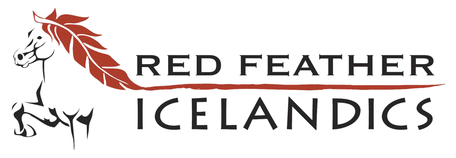 Red Feather Icelandics