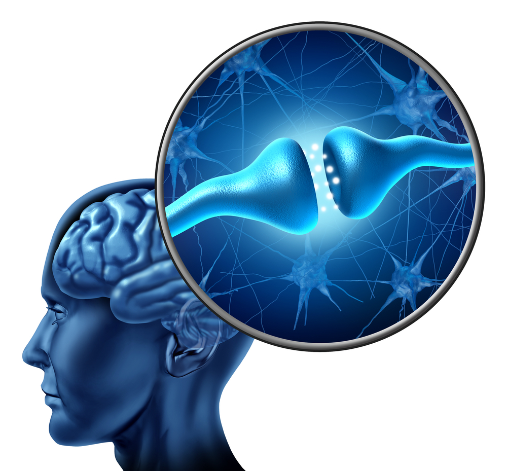 brain synapse large.jpg