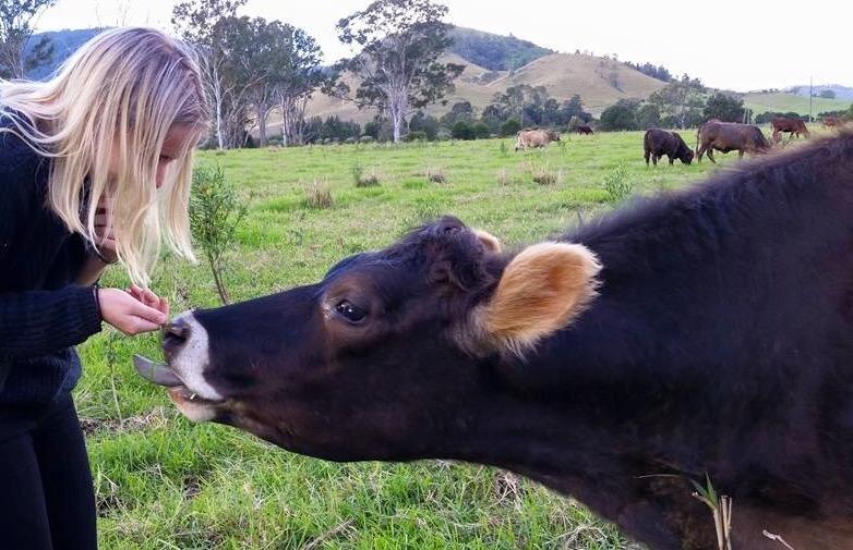 Landy-  Sponsored by Zoe Shaw (Conondale Cow Sanctuary)