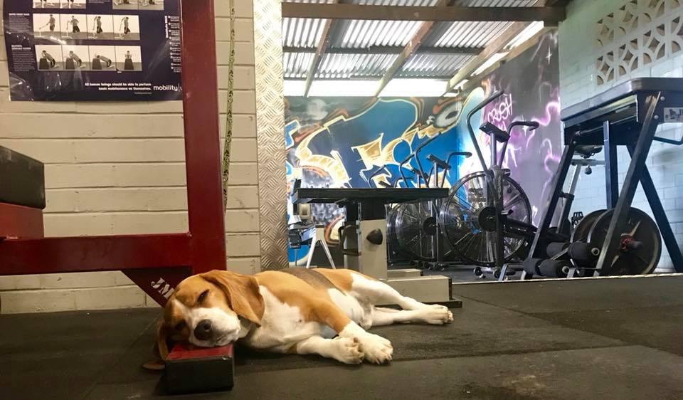gym dog.jpg