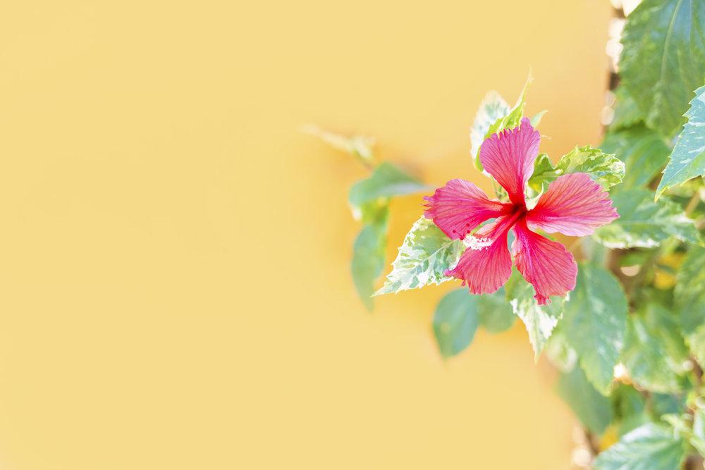 One of my favorite flowers found near Playa Conchal, Costa Rica.