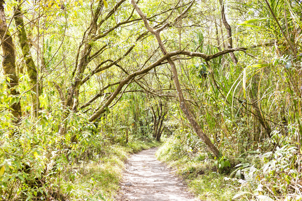 On the trail at Arenal Volcano National Park in La Fortuna, Costa Rica.