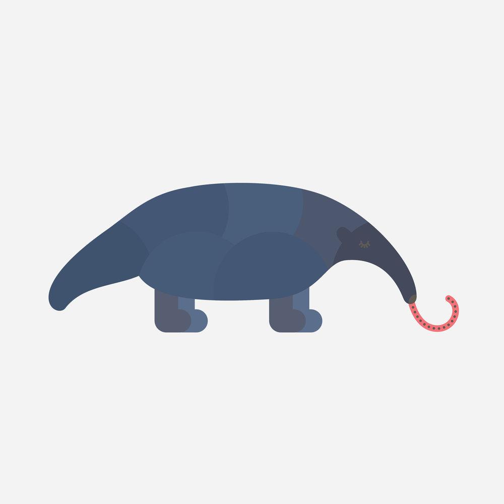 anteater-77.jpg
