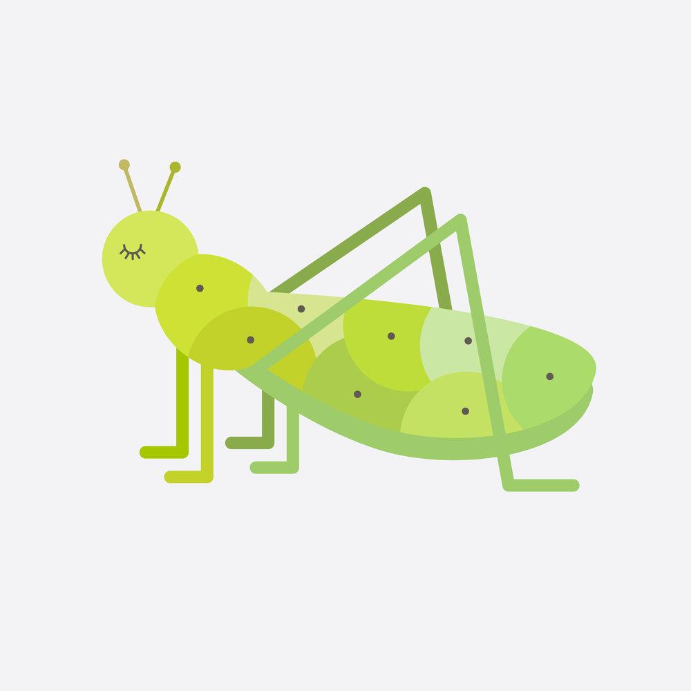 grasshopper-45.jpg