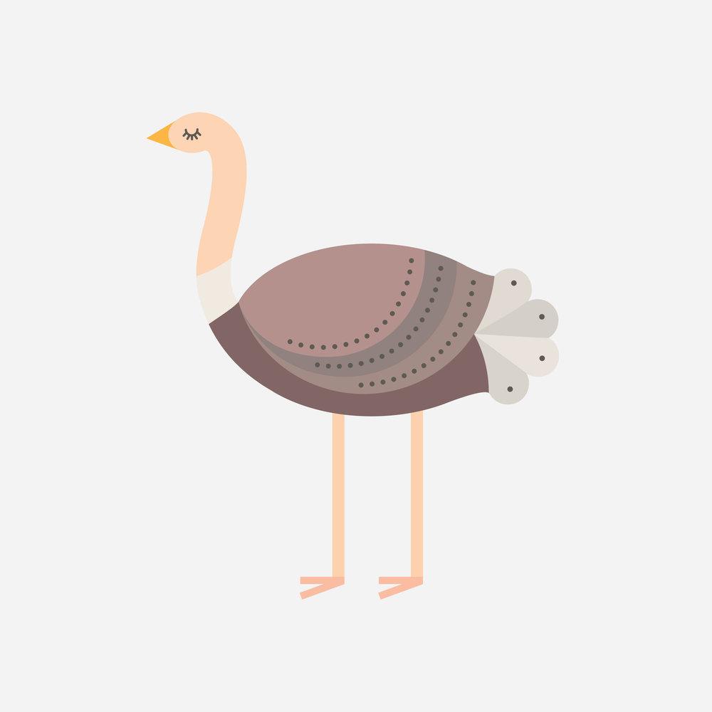 ostrich-69.jpg