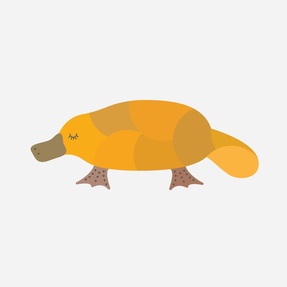 platypus-66.jpg