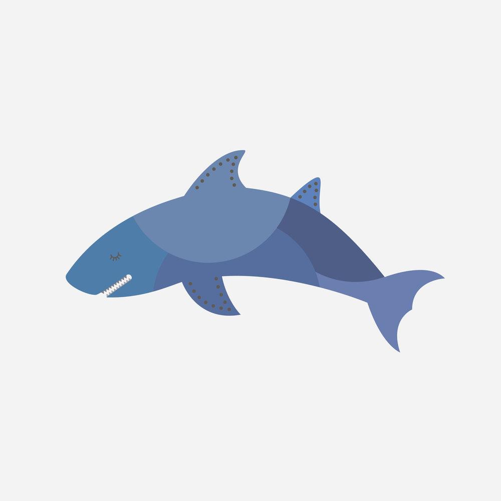 shark-65.jpg