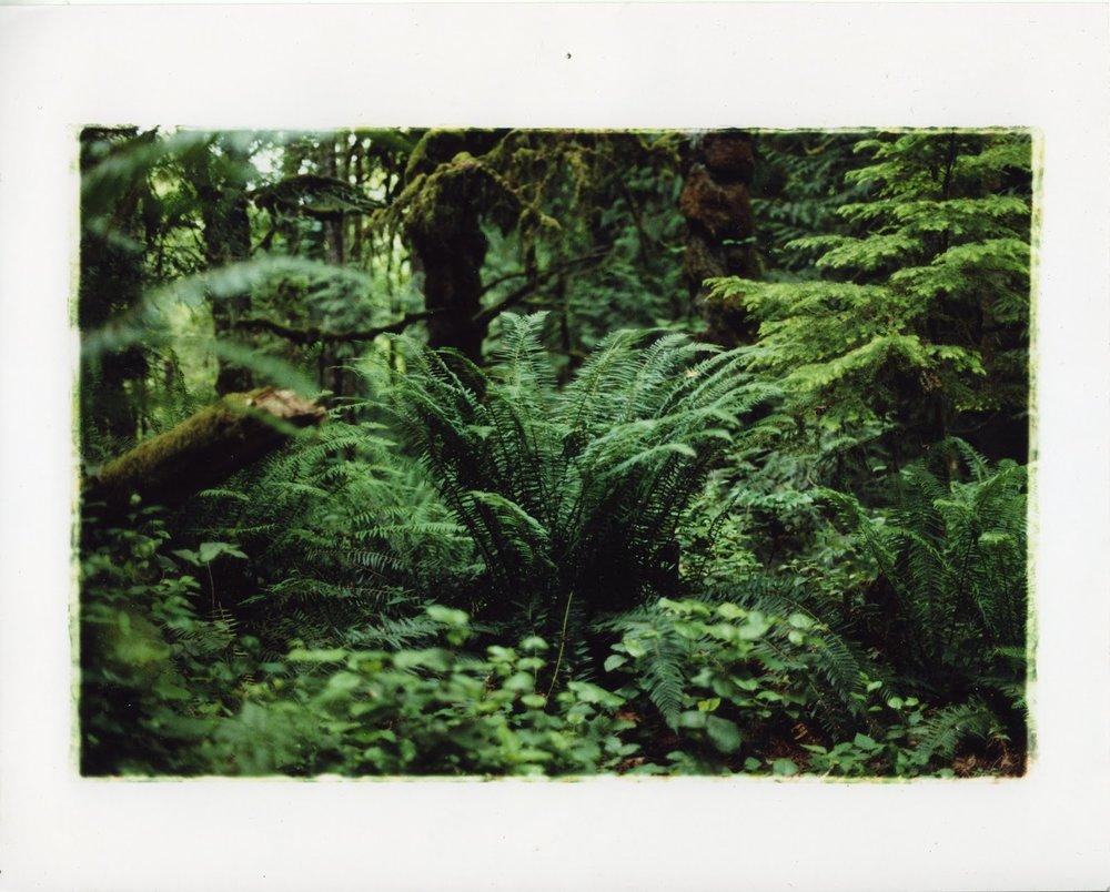 ColorPrint002.jpg