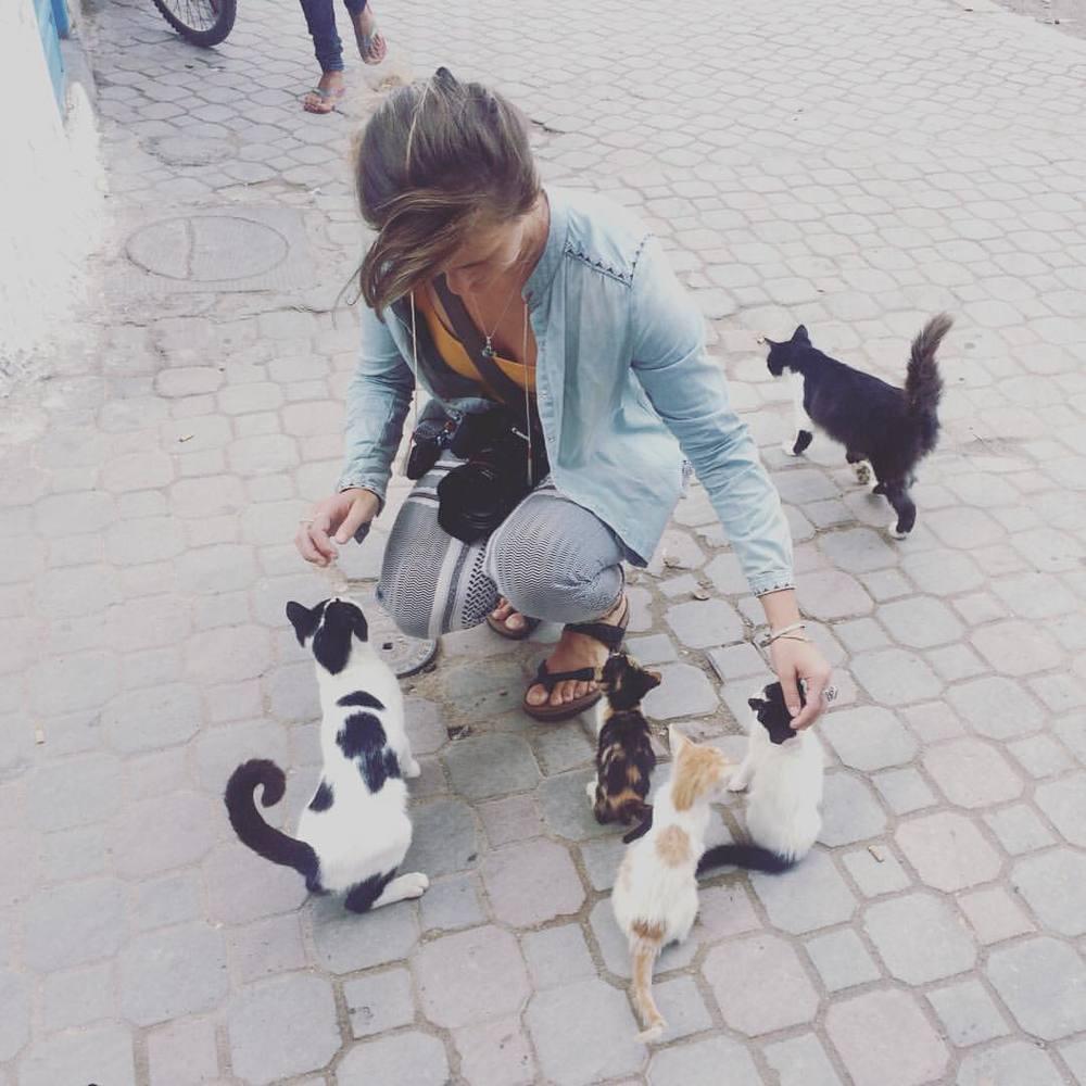 #CatsOfMorocco 🐱🦁🐯