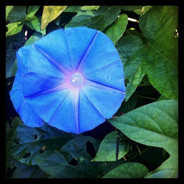 Morning Glory 🌸🌞